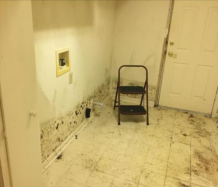 Mold Infestation in Moorhead Before