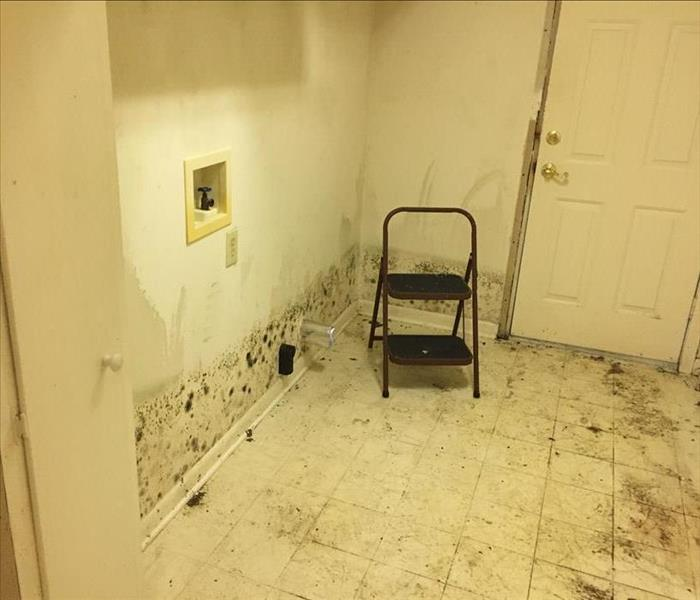 Mold Remediation Mold Infestation in Rosedale